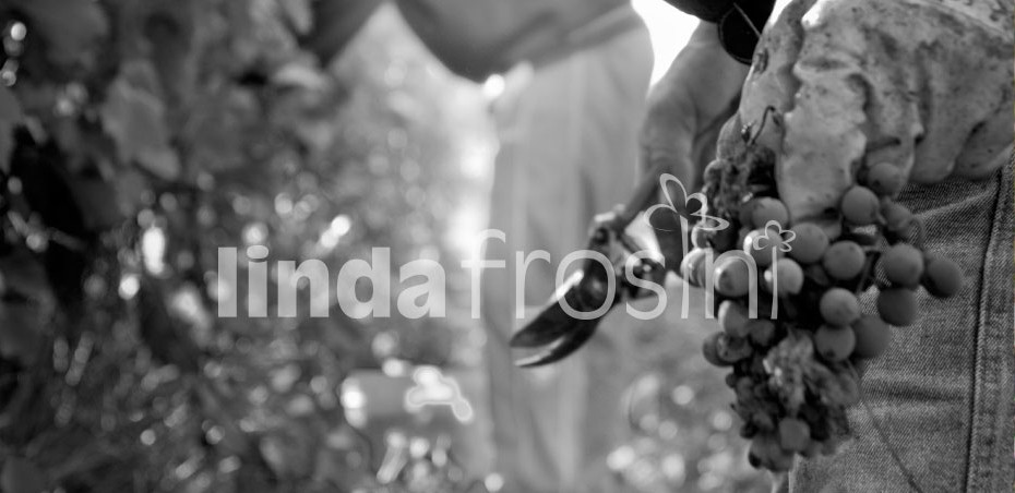 Guerrini - Azienda Agraria nel cuore del Chianti foto di Linda Frosini